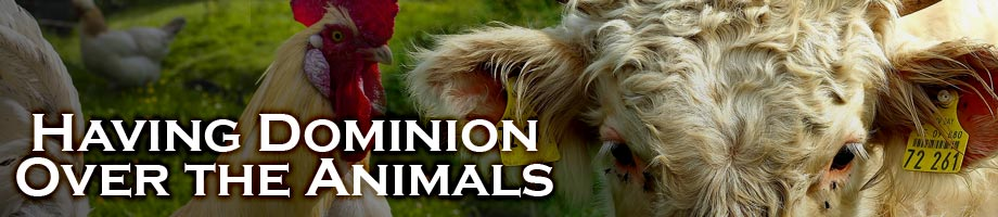 What Does Having Dominion Over Animals Mean?